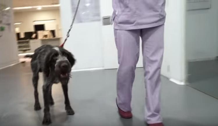 khan-perro-abusado-maltratado10