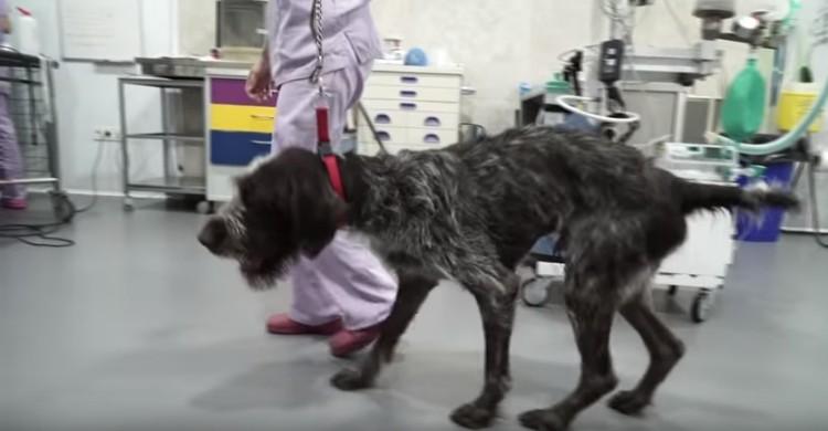 khan-perro-abusado-maltratado11