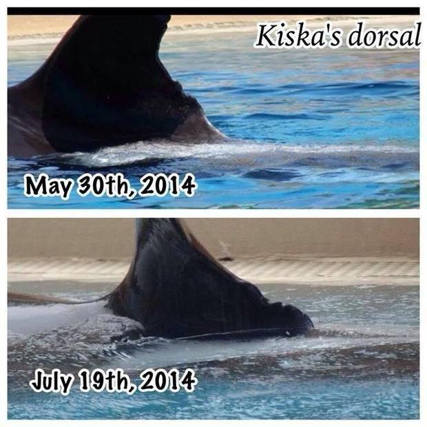 kiska la orca 1