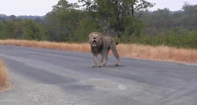leon-herido6