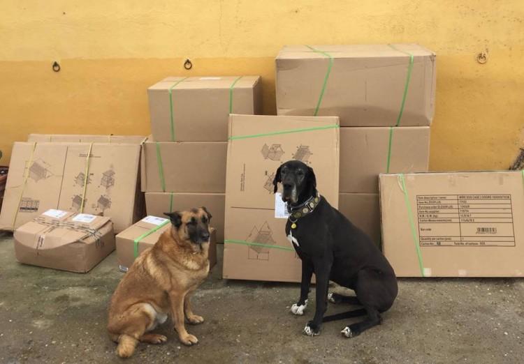 los-perros-que-nadie-quiere2