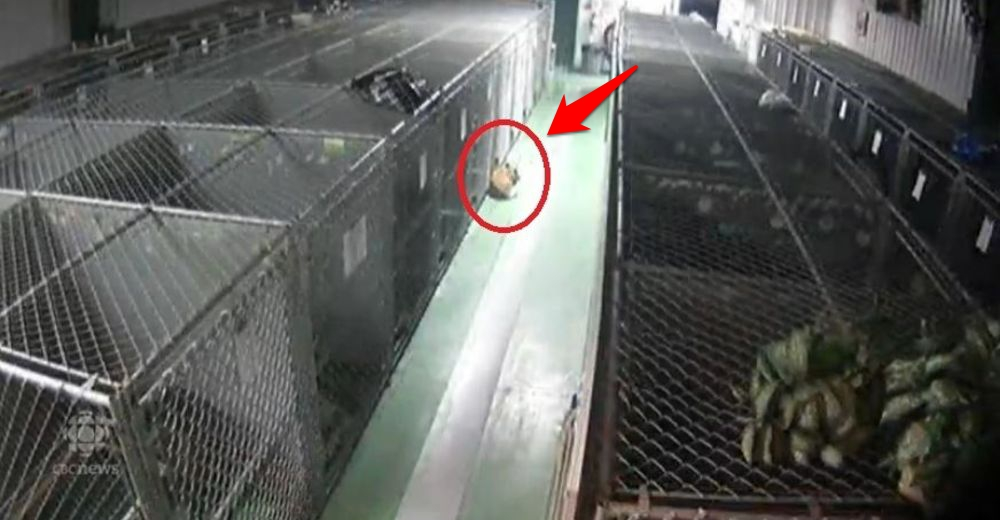 Perrita escapa de su jaula en un refugio tras escuchar llorar a unos cachorros que buscaban amor