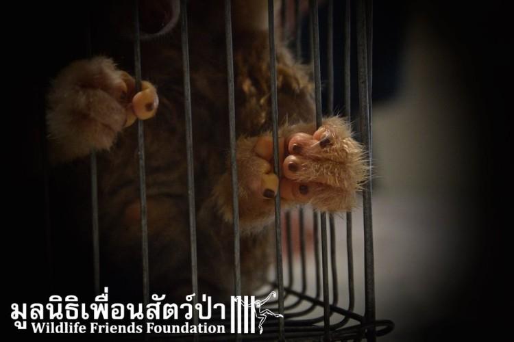 mascotas vendidas en FB 11