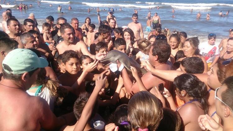 muere-delfin-por-sacarlo-del-mar1