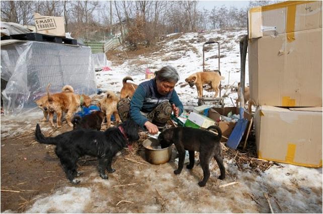 mujer rescata 200 perros 1
