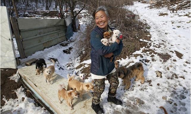 mujer rescata 200 perros 2
