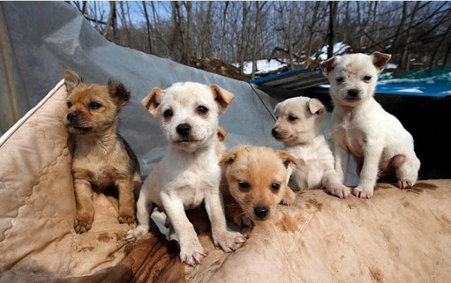 mujer rescata 200 perros 3