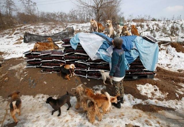 mujer rescata 200 perros 4