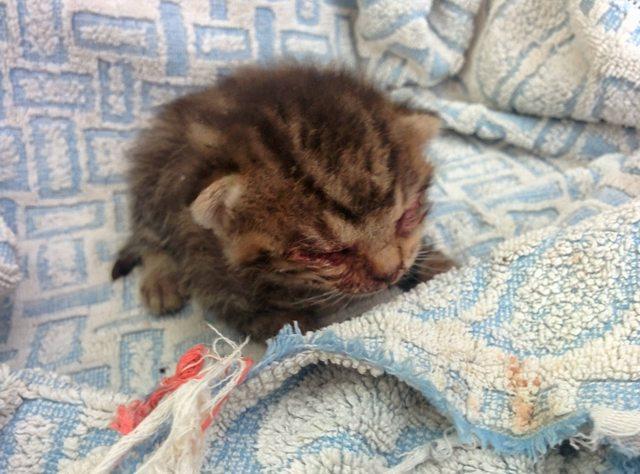 penny el gatito 1