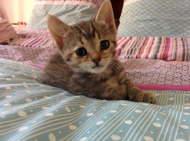 penny el gatito 11