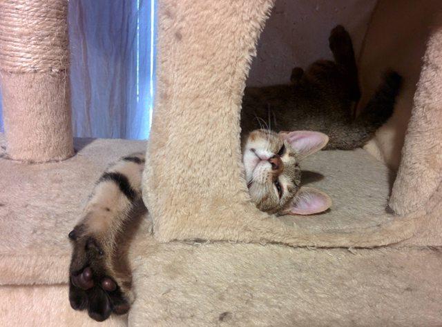 penny el gatito 13