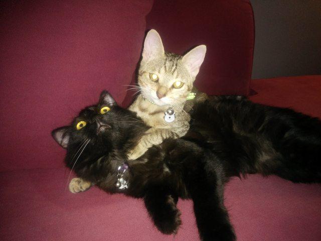penny el gatito 14