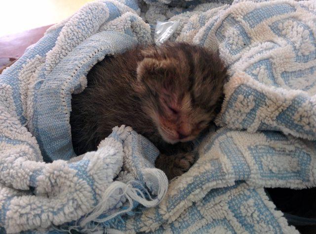 penny el gatito 3