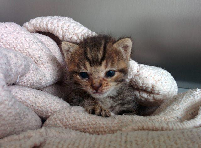 penny el gatito 6