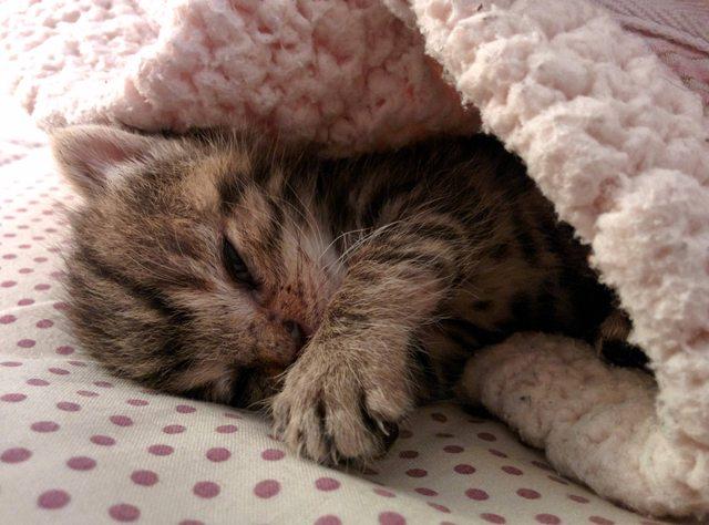 penny el gatito 7
