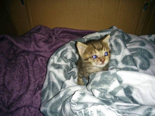 penny el gatito 8