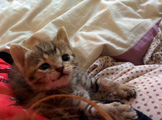 penny el gatito 9