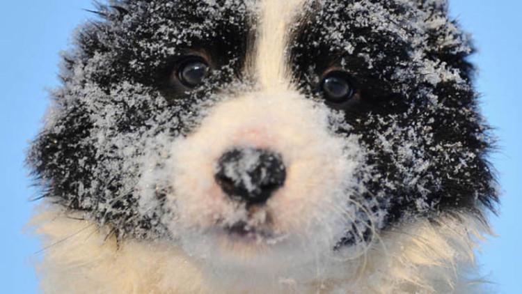 perrito-invierno