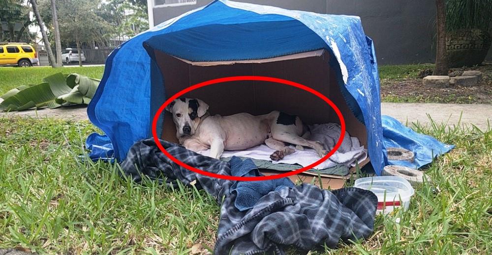 El drama del perrito abandonado que sigue esperando a su familia que jamás regresará