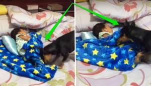 perro arropa bebe