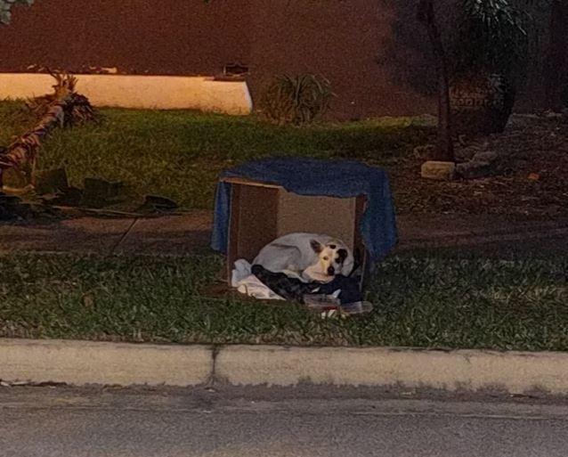 perro espera por dueño 4