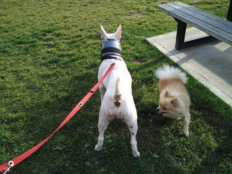 perro muerde a otro perro 1