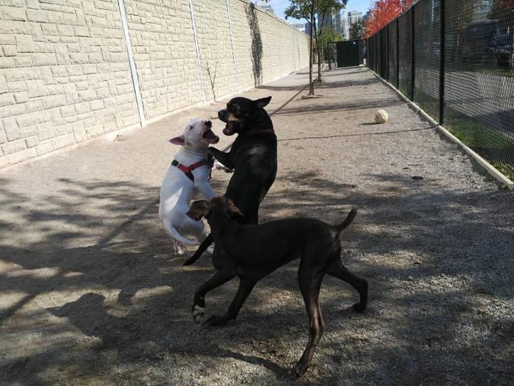 perro muerde a otro perro 2