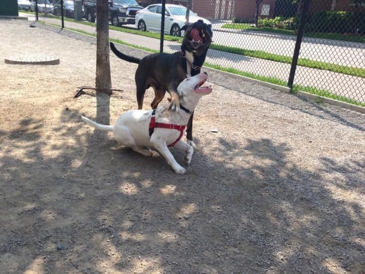perro muerde a otro perro 5