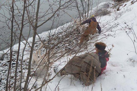 perro rescata aguila 5