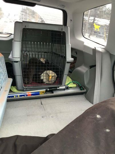 perro rescata aguila 9