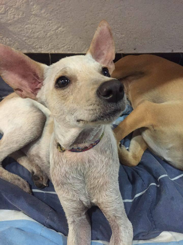 perro-rescatado-busca-hogar1