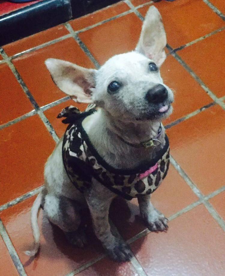 perro-rescatado-busca-hogar2