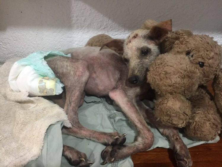 perro-rescatado-busca-hogar3
