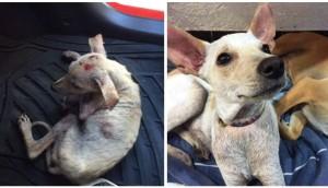 perro-rescatado-busca-hogar5