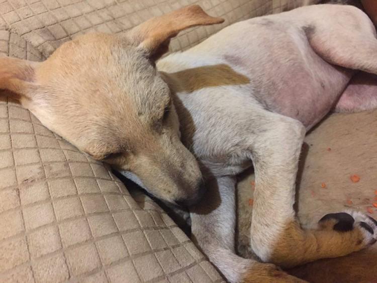 perro-rescatado-busca-hogar6