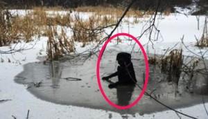 perro-rescatado-hielo