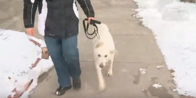 perro-rescatado-michigan12