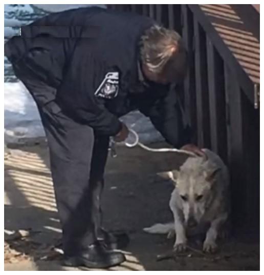 perro-rescatado-michigan13