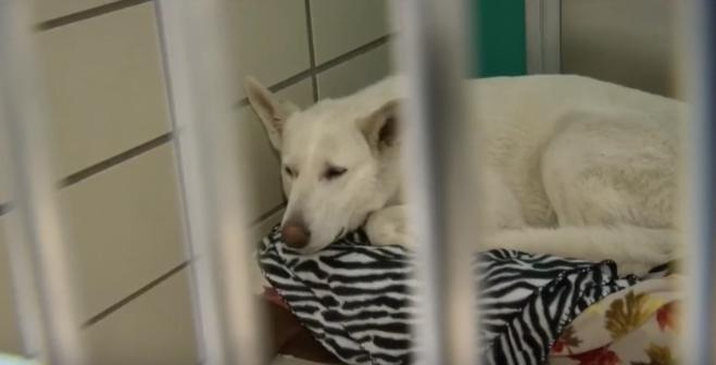 perro-rescatado-michigan9