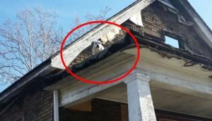 perro rescate del techo 7