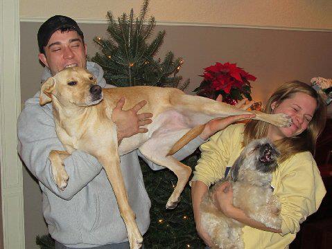 perros celosos 1