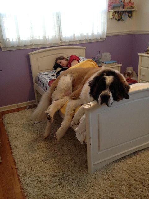 perros celosos  3