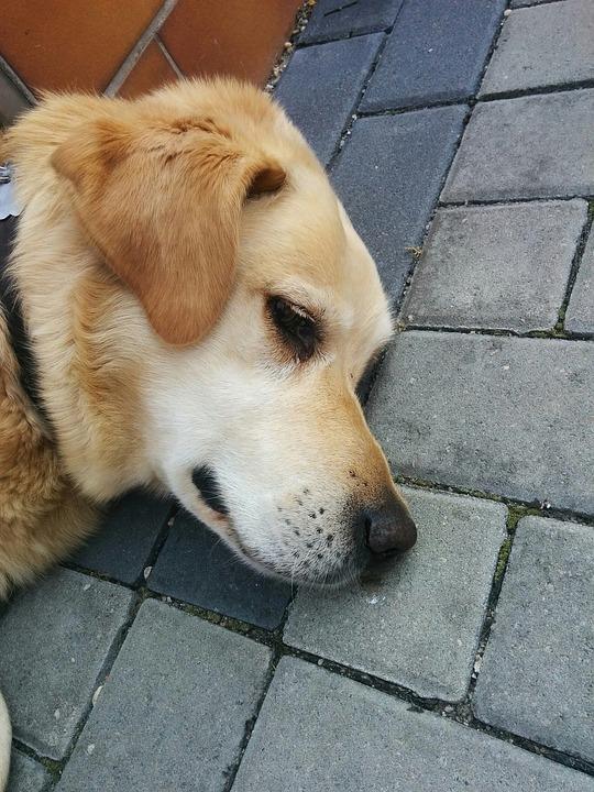 perros celosos 5