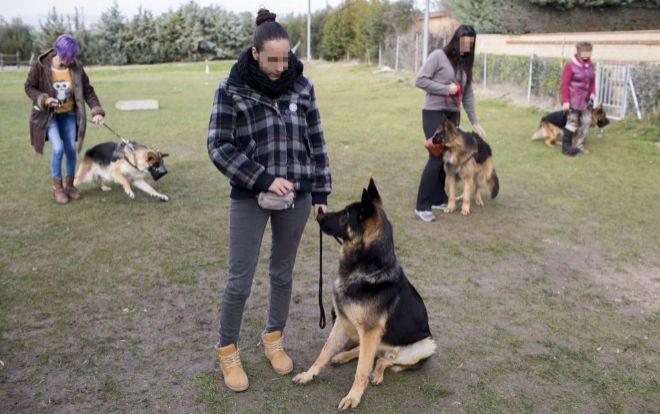 perros-defensores-de-mujeres-maltratadas2