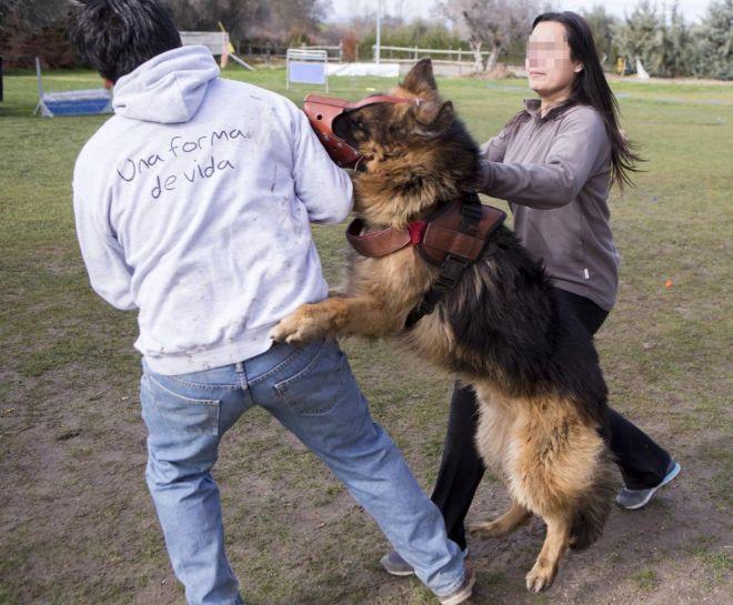 perros-defensores-de-mujeres-maltratadas3