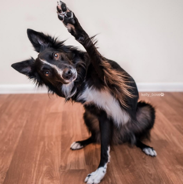 perros-envy-sain1