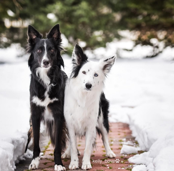 perros-envy-sain2