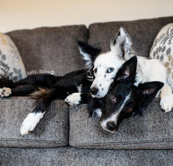 perros-envy-sain5