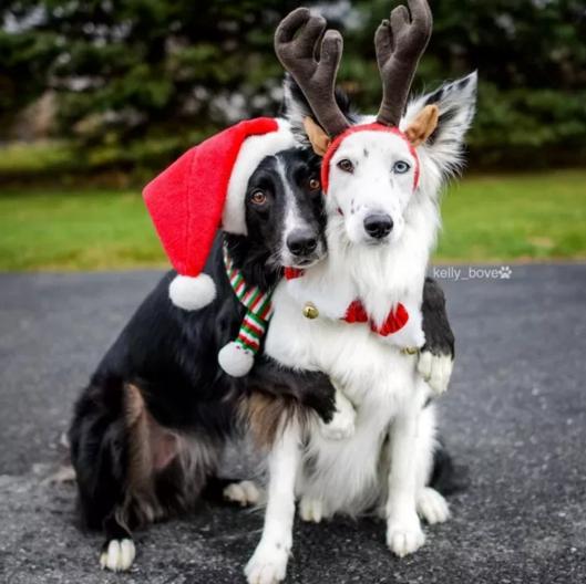 perros-envy-sain7