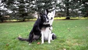 perros-envy-zain-abrazados